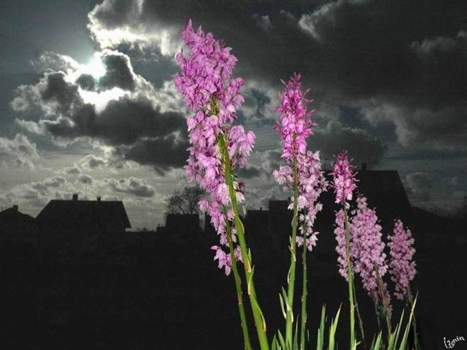 俄罗斯摄影大师Zenin杰作(不看后悔一辈子) - 彼岸花---小玉儿 - 彼岸花--太阳雨